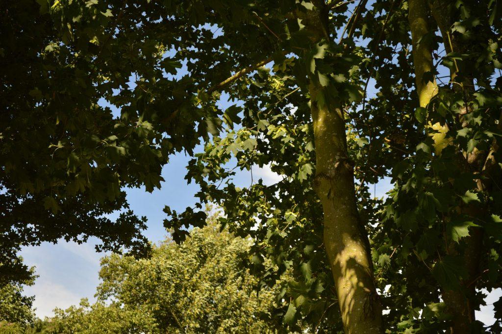 SBSOS Tree